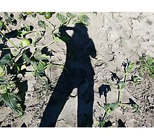 Shadow Over The Pumpkin Patch Photographic Print
