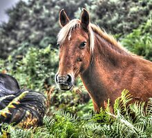 Flaxen-maned New Forest Pony of Hampshire, England by Skye Ryan-Evans