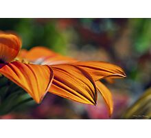 Orange Flower in the Garden Photographic Print