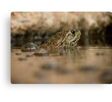 Chiricahua Leopard Frog ~ Gas Powered Canvas Print