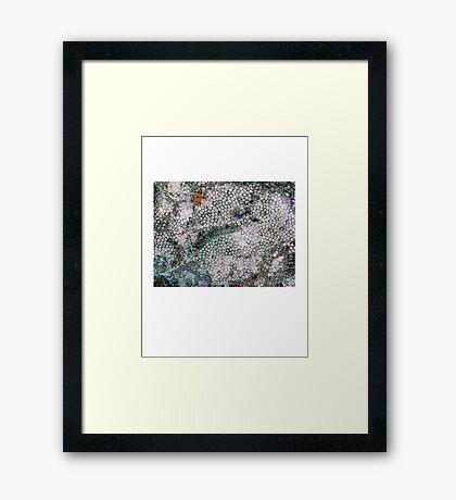 Fossil Carnage 1 Framed Print