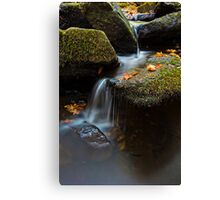 A Stream and Leaves Canvas Print