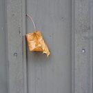 one leaf by lukasdf