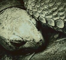 Giant Tortoise by tropicalsamuelv