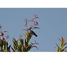 Pretty Green Sunbird Photographic Print