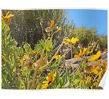 Blomme in Namakwaland Poster