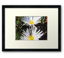 Wit in Namakwaland Framed Print