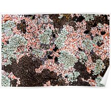 Lichen on pink granite Poster