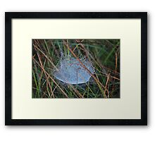 Nature's Engineers 3 Framed Print
