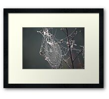 Nature's Engineers 6 Framed Print