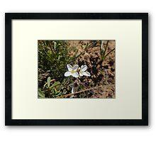 Wit tweeling Framed Print