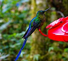 Mindo Hummers Are So Pretty by Al Bourassa