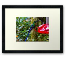 Mindo Hummers Are So Pretty Framed Print
