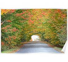 The autumn trees tunnel on country road Poster