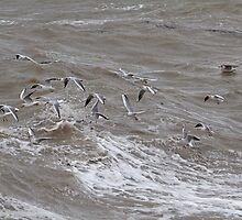 Seagulls on the Stormy Sea at Herne Bay  Kent by Keith Larby