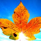 Maple Leaf against blue sky by ©The Creative  Minds