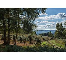 A walk on Woolbeding Common Photographic Print