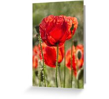 Field poppies Greeting Card