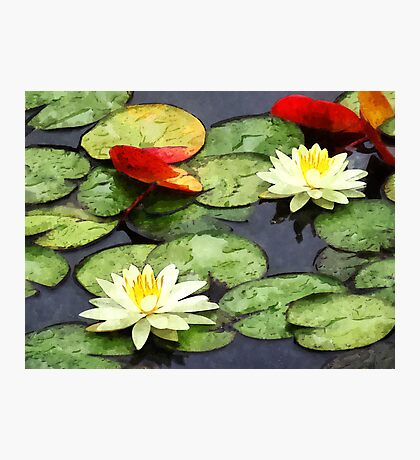 Water Lily Pond in Autumn Photographic Print