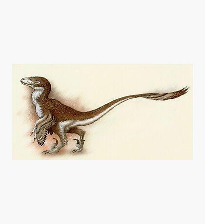 Deinonychus Study Photographic Print