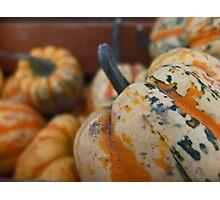 Fall Fruit  Photographic Print