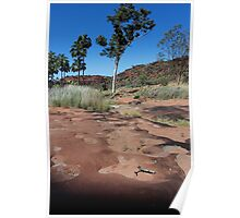 Cycad Gorge, Palm Valley  NT Poster