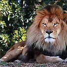 The King by Maureen Clark