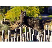 Cat Yoga Photographic Print
