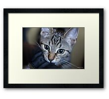 In For The Close Up Framed Print