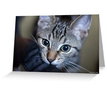 In For The Close Up Greeting Card