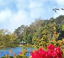 Geese over Stow Lake by David Denny