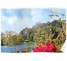 Geese over Stow Lake Poster