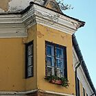 The Corner Window by Lucinda Walter