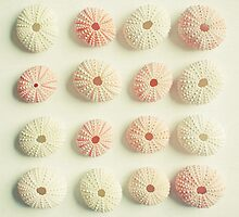 Sea Urchin Collection by Cassia