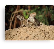 Desert Spiny Lizard (Juveniles) Canvas Print