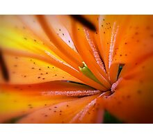 Eye of The Tiger, Lily Photographic Print
