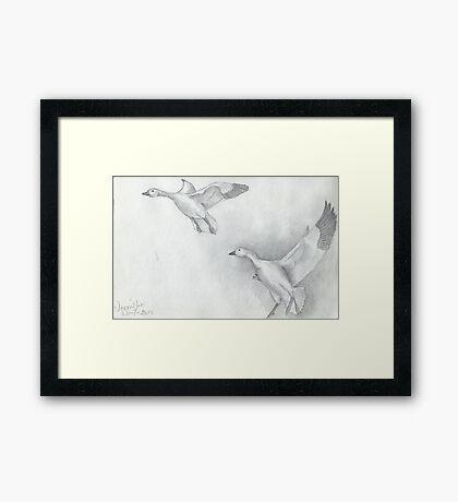 Snow Goose Flying Framed Print
