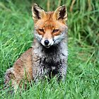 Red Fox Portrait by Christopher Lloyd