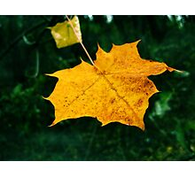 Gilded leaf Photographic Print