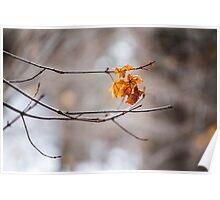 Winter, Little Cottonwood Canyon, Utah Poster