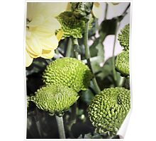 Baby Green Flowers Poster