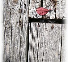 red and wood by arteology