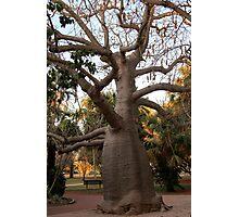 BOAB TREE, Broome Photographic Print