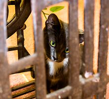 Gracie Behind Bars by Rick  Grisolano Photography LLC