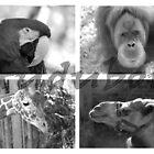 Audubon by HeatherPK