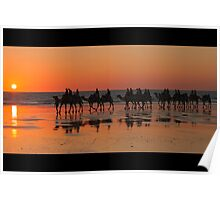 CAMELS AT SUNSET , BROOME . W.A Poster