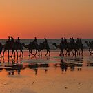 Camels at Sunset, Broome, W.A by Pauline Tims
