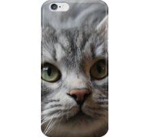 Siberian cat, Orlando iPhone Case/Skin