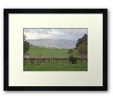 Vineyard in the Valley Framed Print