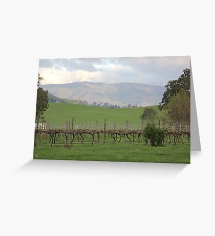 Vineyard in the Valley Greeting Card